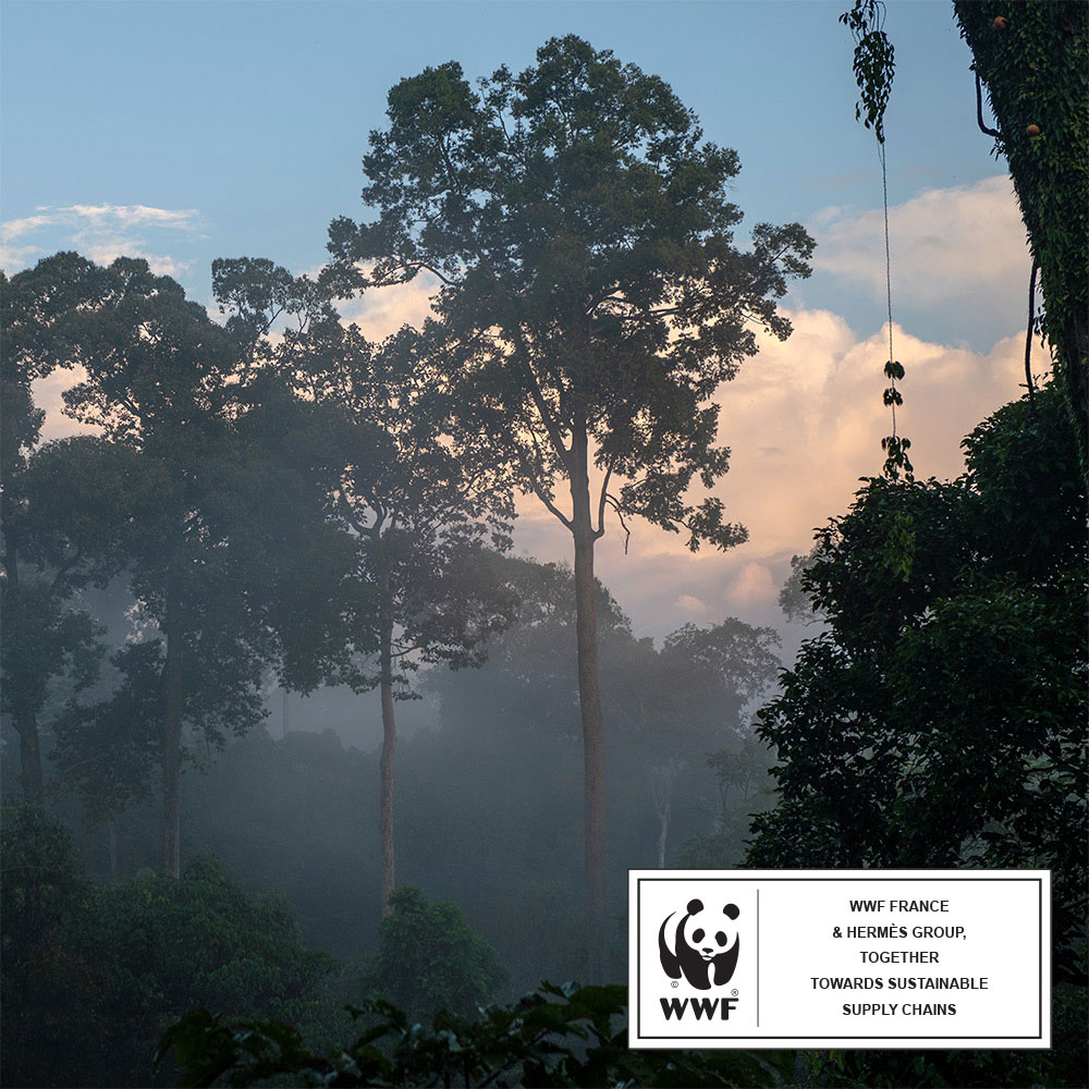 Forêt tropicale - WWF