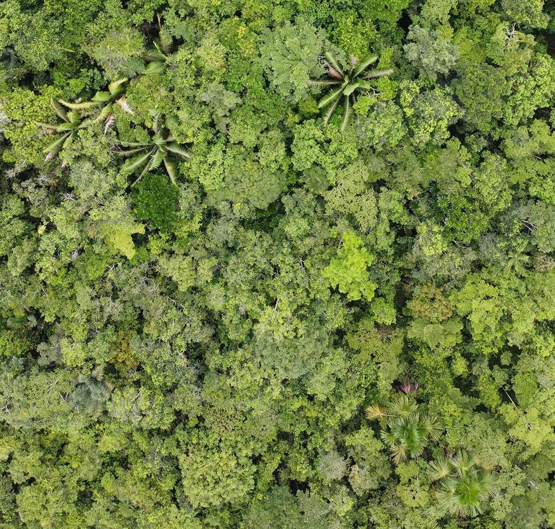 Mangrove David Geere 1